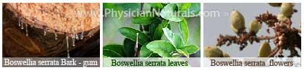 Boswellia Serrata Tree Bark - Gum - Supplement